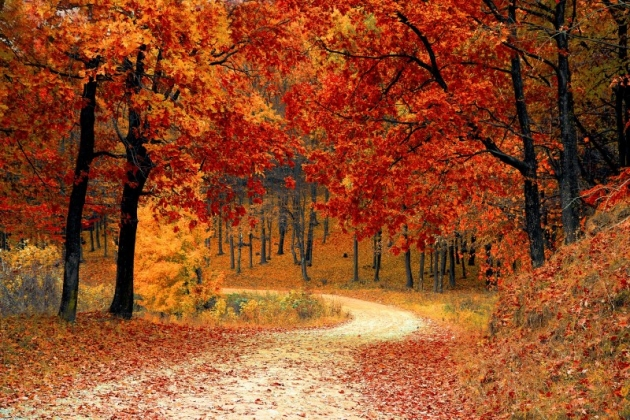 autumn forrest free fall wallpapers