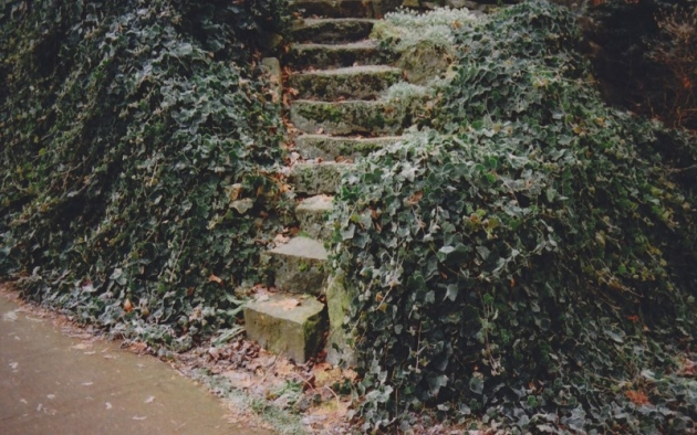 old stairs with plants over it free fall wallpapers